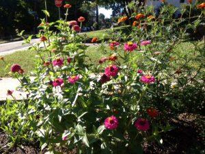 relationship garden
