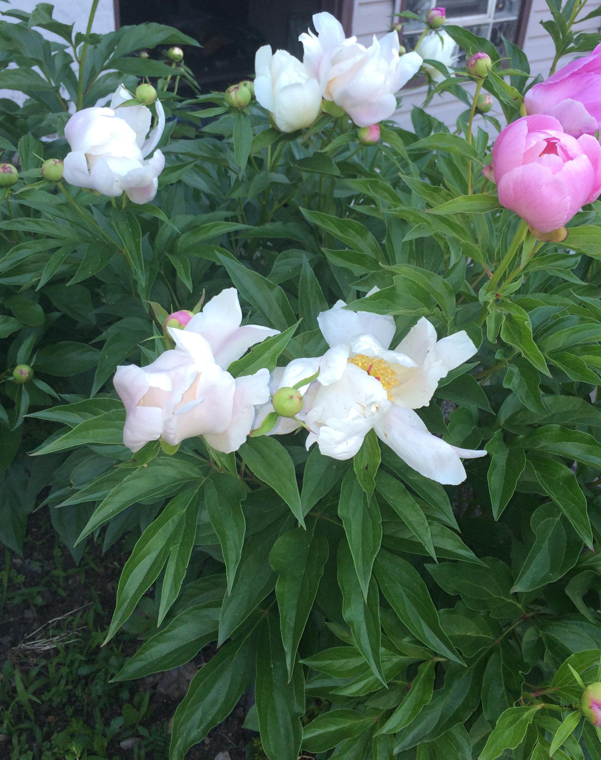 Life is a journery_flower garden